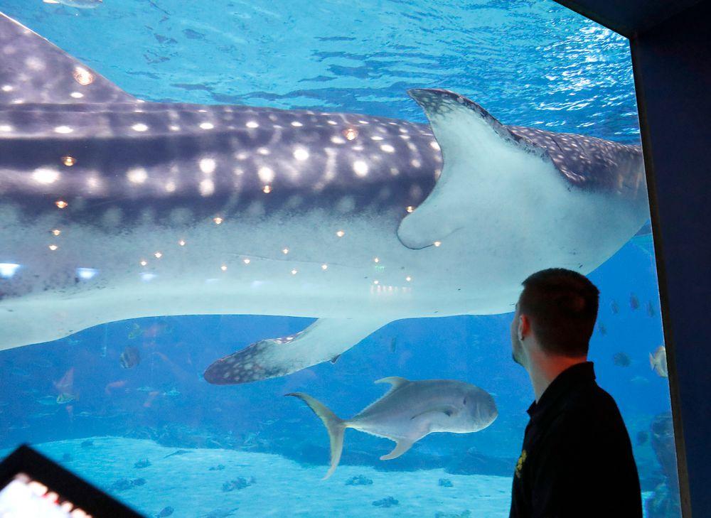 Keith Duncan at the Georgia Aquarium.