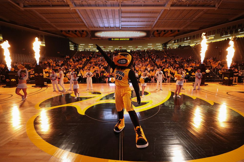 Herky The Hawk against the Maryland Terrapins Thursday, January 9, 2020 at Carver-Hawkeye Arena. (Brian Ray/hawkeyesports.com)