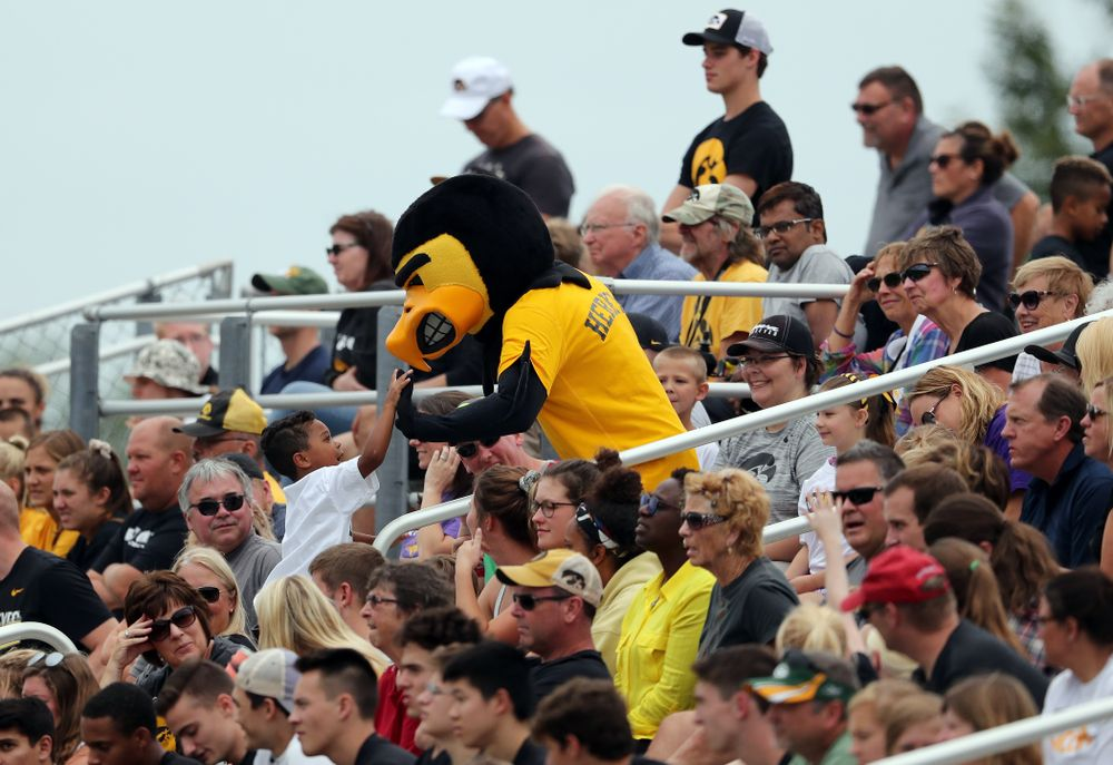 Herky The Hawk during a 6-1 win over Northern Iowa Sunday, August 25, 2019 at the Iowa Soccer Complex. (Brian Ray/hawkeyesports.com)